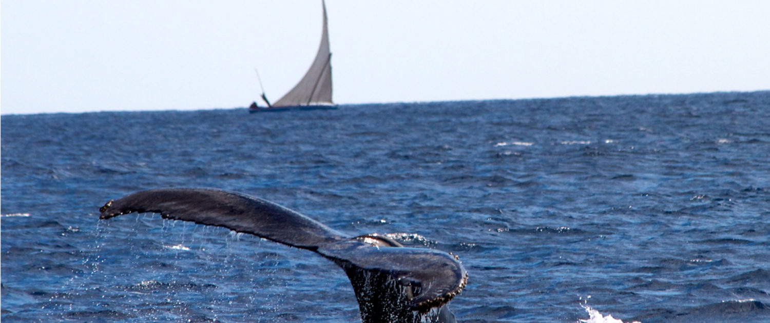 Infinite_Africa_Travel_Mozambique_Nuarro_Lodge_Whales_Dhow