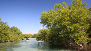 Infinite_Africa_Travel_Mozambique_Coral_Lodge_Kayaking_Mangrove_Adventure