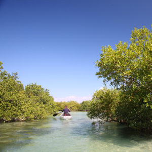 Infinite_Africa_Travel_Mozambique_Coral_Lodge_Kayaking_Mangroves