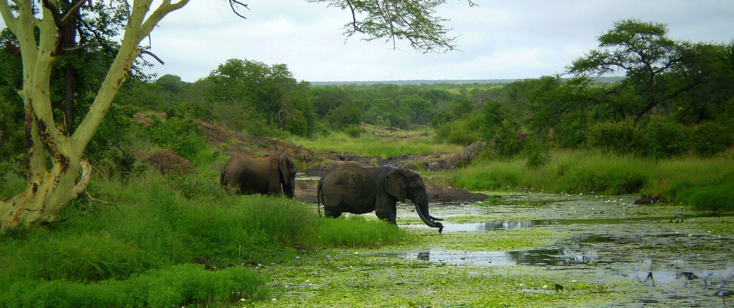 Infinite_Africa_Travel_Mozambique_Machampane_Elephants_Bush_Safari