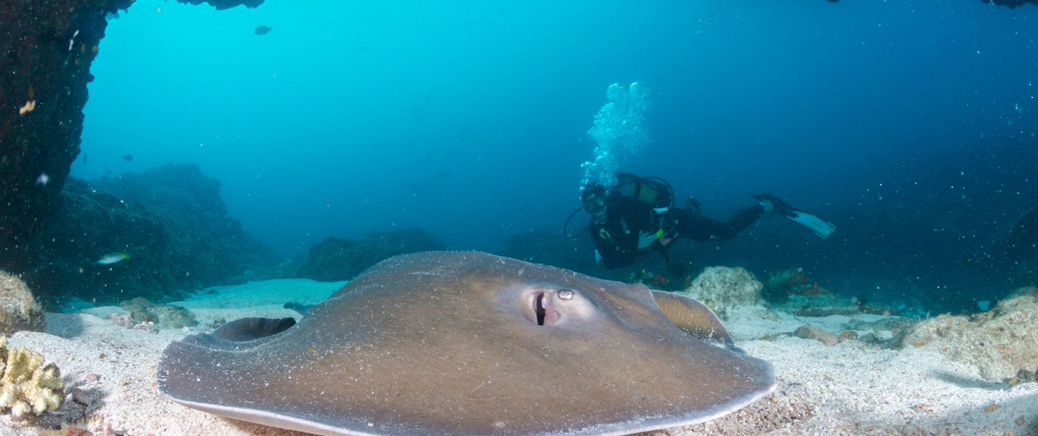 Infinite_Africa_Travel_Mozambique_Machangulo_Beach_Lodge_Scuba_Diving_Stingray