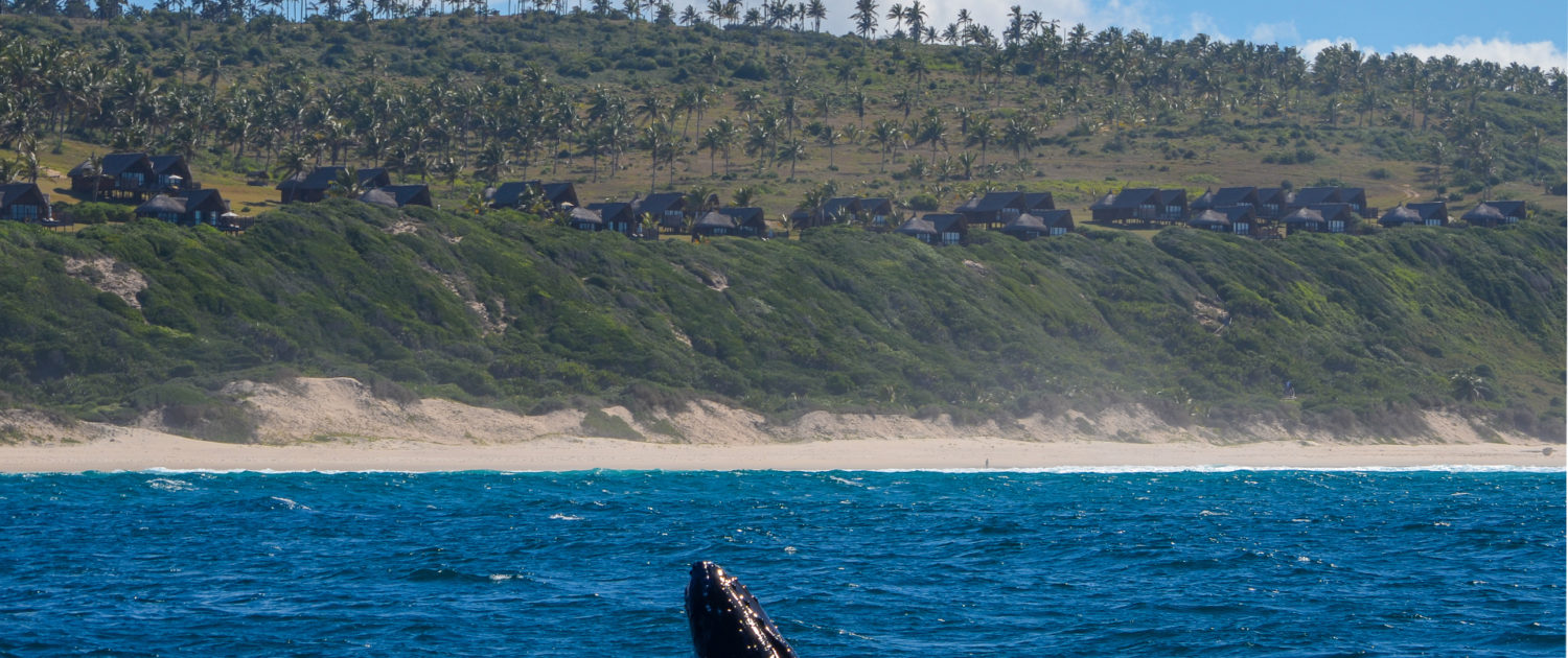 Infinite_Africa_Travel_Mozambique_Massinga_Beach_Whales_Indian_Ocean