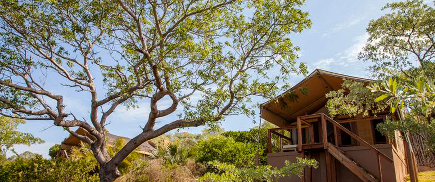 Infinite_Africa_Travel_Mozambique_Naara_Eco_Lodge_Tropical_Gardens
