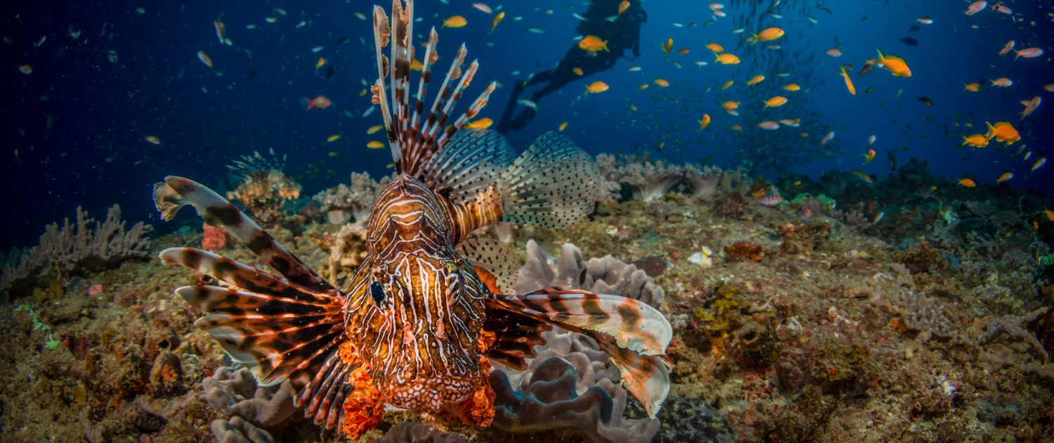 Infinite_Africa_Travel_Mozambique_White_Pearl_Lion_Fish_Scuba_Diving