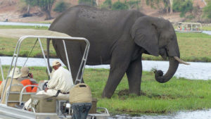 infinite_africa_travel_botswana_kubu_lodge_boat_cruise_elephant