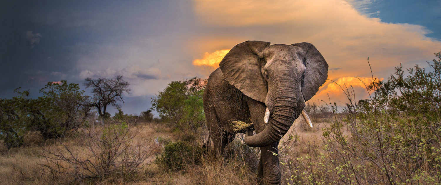 infinite_africa_travel_south_africa_motswari_game_lodge_elephant_with_turbulent_skies